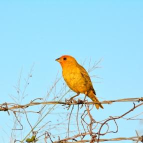 Aves Silvestres